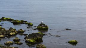 A lone gull on a stone. Stock Photo