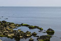 A lone gull on a stone. Stock Images