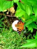 lone härlig fjäril Royaltyfri Bild