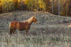Lone häst Royaltyfri Bild