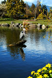 Lone heron. On the beautiful lake in Canada Stock Images