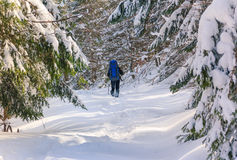 Lone hiker with a backpack walking along the trail in the winter mountains.  Stock Photos