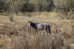 Lone horse in a field in Autumn Stock Images