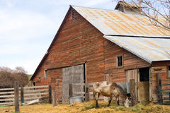 Lone Horse Grazes On Feed Farm Ranch Barn Corral Stock Image