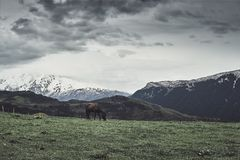 A horse grazing in the valleys of the mountains. Royalty Free Stock Photo