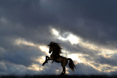 A Lone horse in a meadow. Stock Image