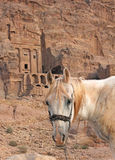 Lone horse near the Urn tomb in Petra Stock Photos