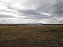 Lone horse in patagonian plain. Lone horse in the plain south of Torres del Paine and north of Puerto Natales Royalty Free Stock Image