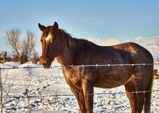 Lone Horse Stock Image