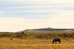 Lone horse in steppe Royalty Free Stock Photo