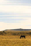 Lone horse in steppe Royalty Free Stock Image