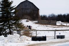 Lone Horse on a Winter Farm Stock Image