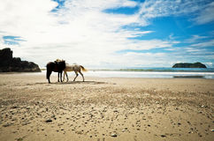 Lone Horses Beach Shore, Costa Rica stock photo