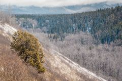 Lone Juniper on the South Slope - Boreal Forest. A nice lonely juniper tree on a south facing slope is contrasting with the boreal forests of northern Canada royalty free stock photo