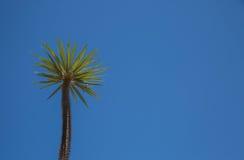 lone kaktus Arkivfoton