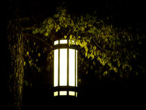 Lone lantern on tree in extreme darkness.  Royalty Free Stock Images