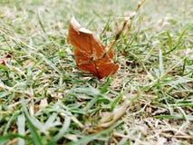 Lone leaf arkivfoto