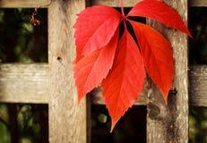 Lone leaf Royaltyfria Foton