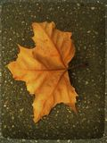 Lone leaf on asphalt Royalty Free Stock Photo