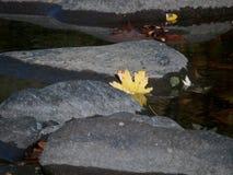 Lone Leaf Fall Foliage Stock Image