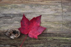 Lone Leaf on a Log Stock Images