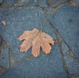 Lone leaf on the pavement Royalty Free Stock Photo