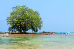 Lone Mangrove Tree in the Rocky Shallows of a Tropical Sea. Lone mangrove tree standing in the rocky shallows off a tropical beach wilderness in Southeast Asia Stock Photo