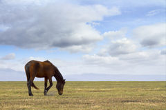 Lone mare in the meadow Royalty Free Stock Image