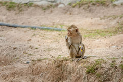 Lone. The monkeys sit mother alone Stock Images