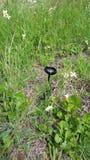 The Lone Mushroom. A lonely mushroom I found Stock Photos