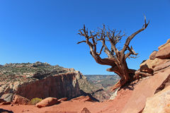 A lone, naked tree clings to the edge of a cliff. Royalty Free Stock Photo