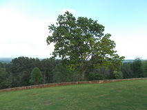 Lone oak at an overlook site in Texas. A picture of an oak tree at an overlook site in Texas Stock Images
