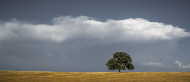 Lone oak tree and clouds Stock Images