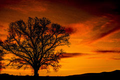 Lone oak tree silhouette beneath a red sky. Stock Photography