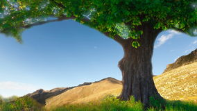 Lone oak tree on a summer meadow. Lone oak tree on a summer meadow stock video footage