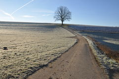 Lone Oak in winter Stock Photo