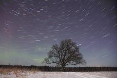 A lone old oak tree Stock Photo