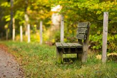 Lone old wooden bench in the green yellow autumn forest. Can be used as background. Free space for text stock photos
