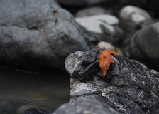 Lone Autumn leaf on boulders stock image