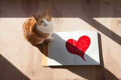 Orange and white tabby cat opened sketch book with red heart. Lone orange and white tabby cat sitting next to a opened sketch book with a large painted red heart Royalty Free Stock Photos
