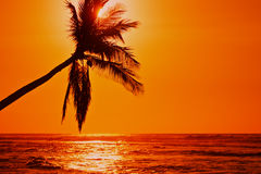 Lone Palm Sunset. A lone palm tree on the beach at sunset in Hawaii Royalty Free Stock Photos