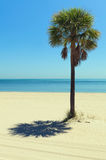 Lone Palm Tree Royalty Free Stock Photo