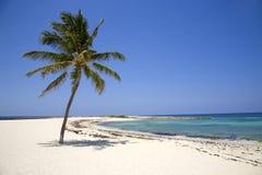 Lone Palm Tree on the Beach Stock Photo