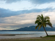 Lone Palm tree on a beach on cloudy day, Fiji Royalty Free Stock Photos