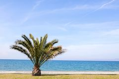 Lone palm tree on a beach Royalty Free Stock Images