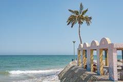 Lone palm tree on a beach Royalty Free Stock Photos
