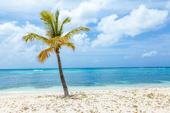 Lone Palm Tree on Beach on Tropical Island Royalty Free Stock Photography