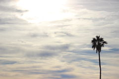 Lone Palm Tree in the cloudy Sky Royalty Free Stock Photo