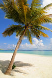 Lone Palm Tree on Maldives Stock Photo