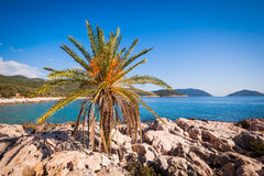 Lone palm tree Royalty Free Stock Images